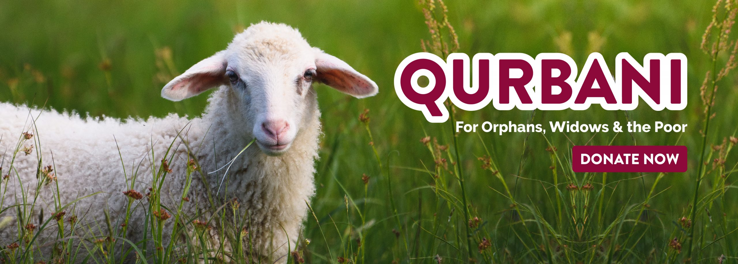 Qurbani-web-banner-Home